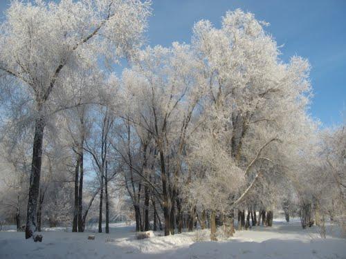 Іній, сніг та мороз