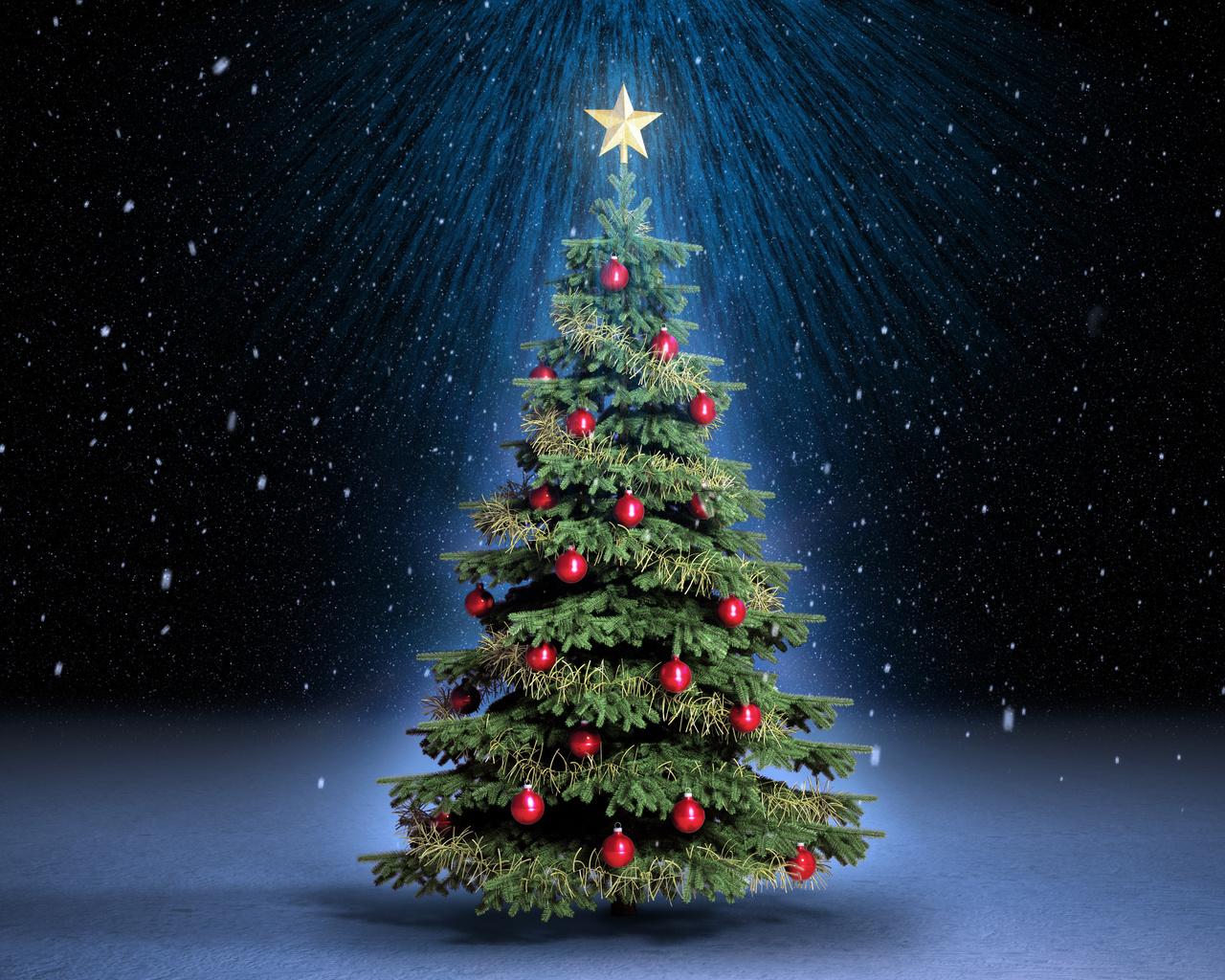 З 25 грудня почнуть продавати ялинки