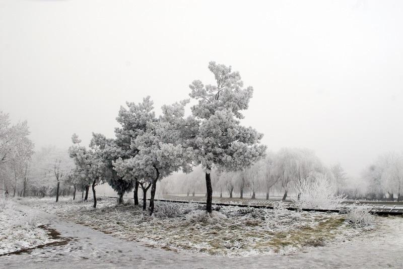 Чим корисні сніг і мороз для здоров'я?